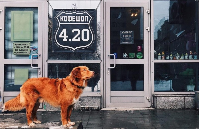 Как открыть кофейню? 6 инсайдерских ответов от основателя «Кофешоп 4.20»