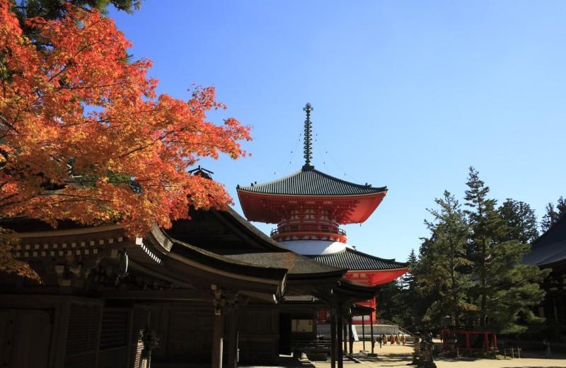 Страна Восходящего солнца: это есть только в Японии
