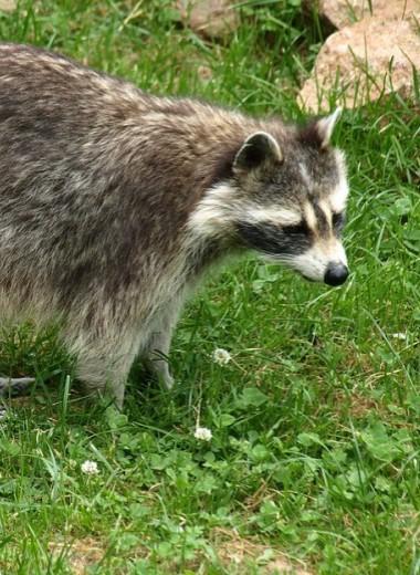 10 животных, вызвавших отключение электросети (посмертно)