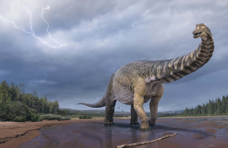 В Австралии нашли одного из крупнейших динозавров в истории