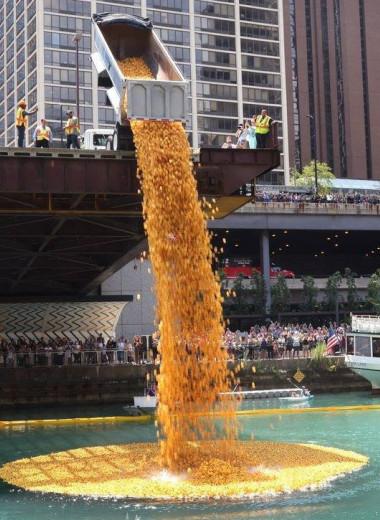 В Чикаго соревновались 70 000 резиновых уток: видео
