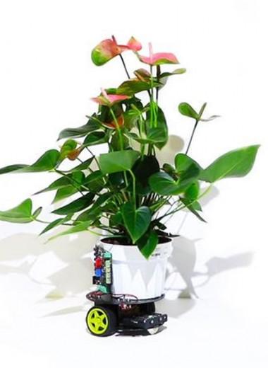 Растение-киборг движется к свету: видео