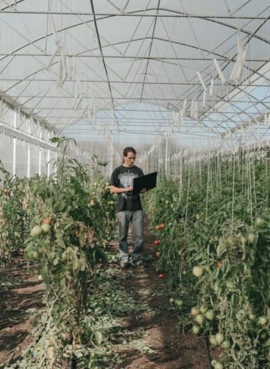 Неокрестьяне и «манящий агротех» с кофемашинами в парниках: как французы вовлекают молодёжь в сельское хозяйство