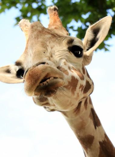 В китайском зоопарке неизвестный забросал жирафа деньгами