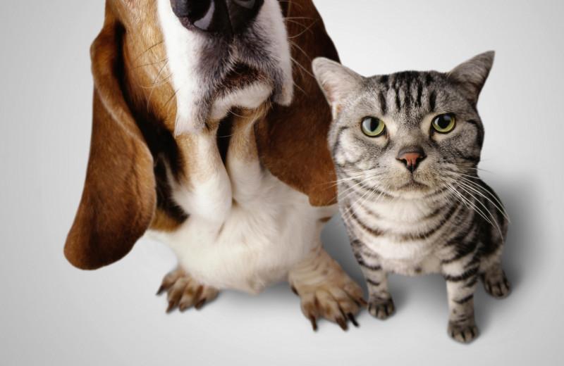 Карта: где в мире больше любят кошек, а где— собак