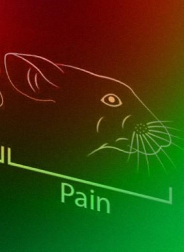 Эмоции мышей определили по выражению морды