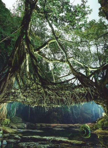 Мост из корней: необычное индийское изобретение