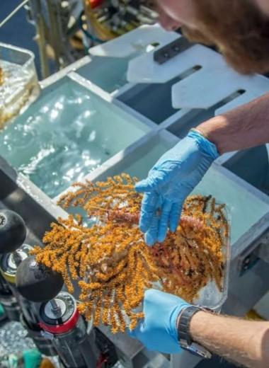 У Галапагосских островов нашли 30 новых видов глубоководных форм жизни