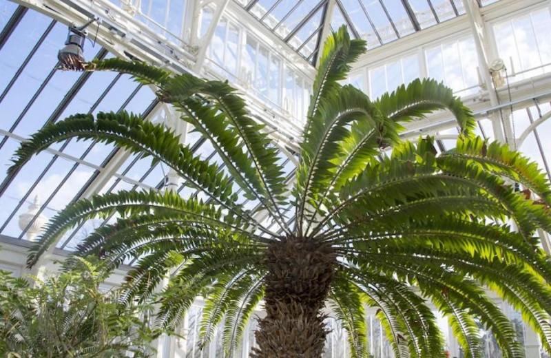 120-летняя Викторианская оранжерея (крупнейшая в мире!) открылась после реставрации