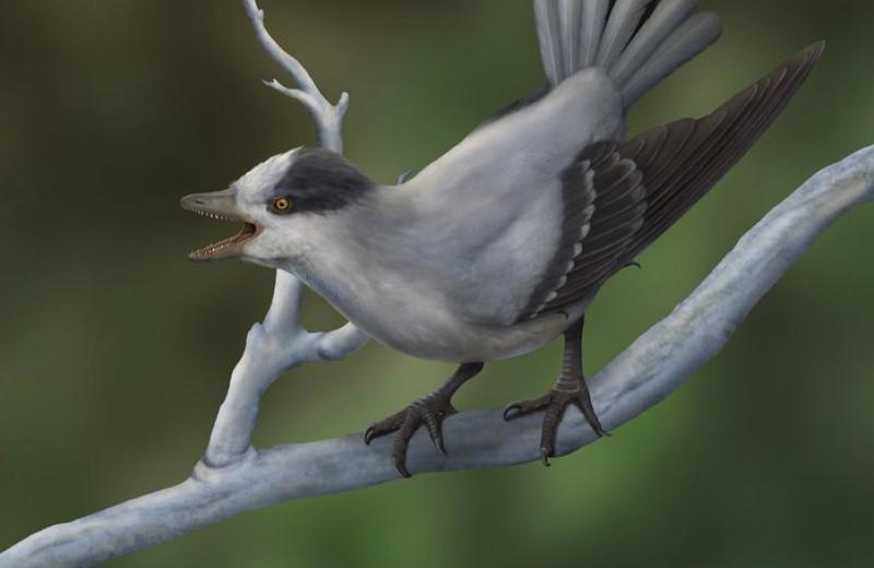 Ископаемая птица доказала, что выживают не только сильнейшие, но и самые сексуальные