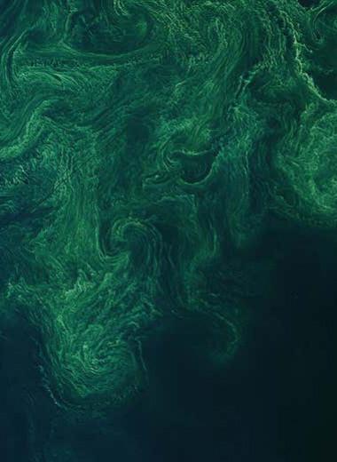 Фитопланктон украсил Балтийское море малахитовым узором: фото