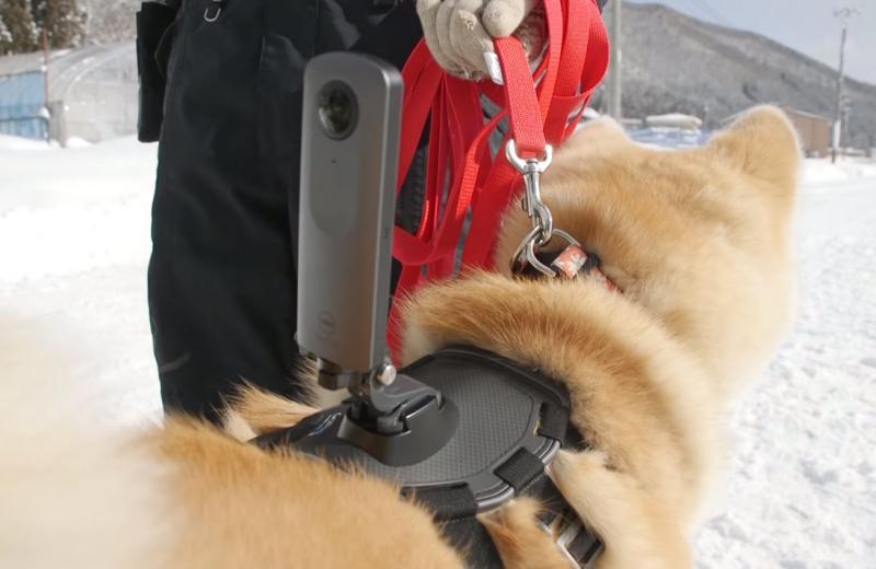 Япония глазами собак: новые панорамы Google