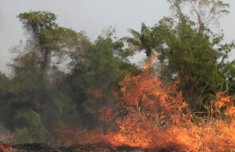 Amazon, помоги Амазонии: пользователи Twitter призвали Безоса посодействовать борьбе с лесными пожарами