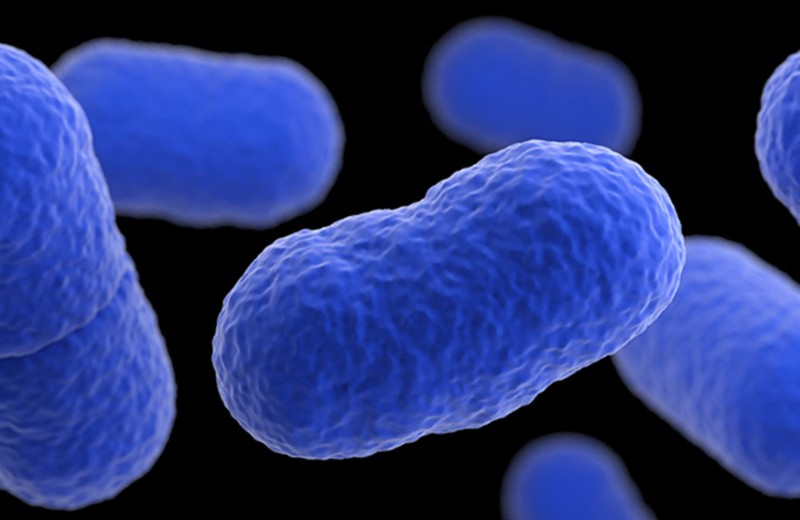 Ученые нашли уязвимое место пищевого патогена