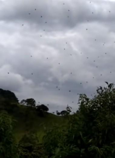 В Бразилии семья оказалась под «паучьим куполом»