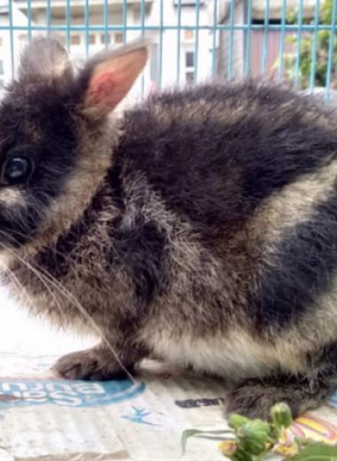 Пост в фейсбуке помог спасти редкого полосатого зайчонка