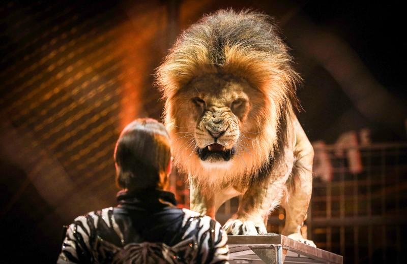 Львы на арене. Как отвечать на публичные обвинения