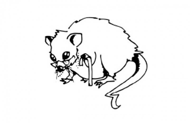 Ученые улучшили иммунный ответ на вакцину у старых мышей
