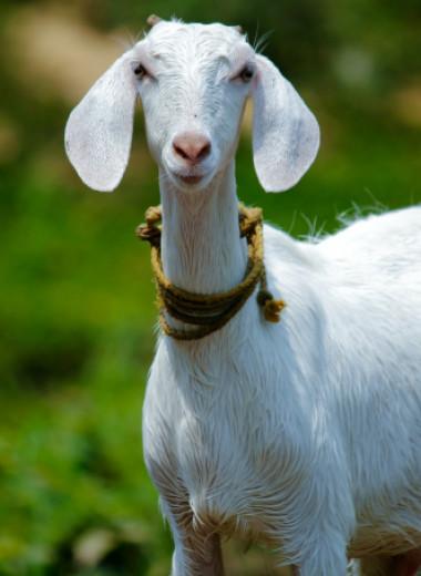 Зоозащитники призвали отказаться от использования «звериных» оскорблений
