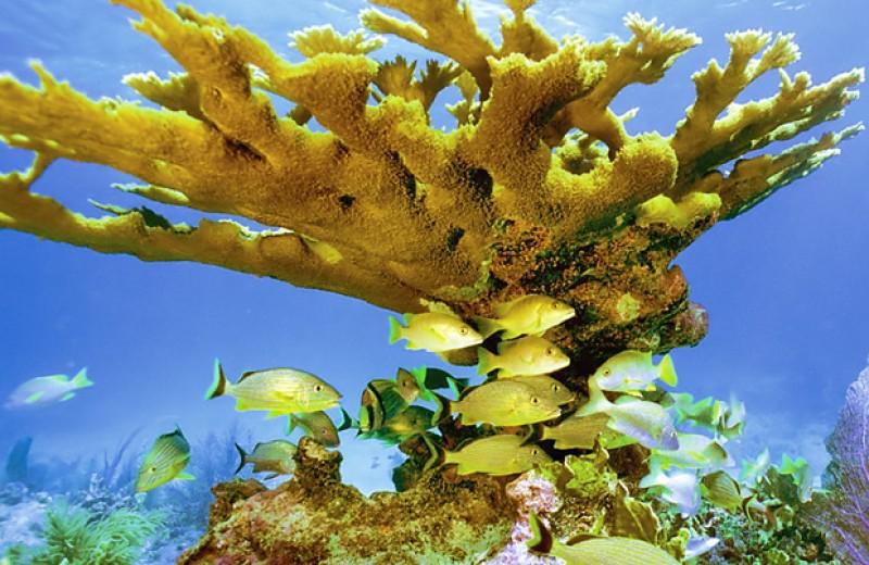 Кораллы начали гибнуть уже в середине XX века