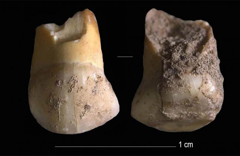 В Италии нашли зуб одного из последних европейских неандертальцев
