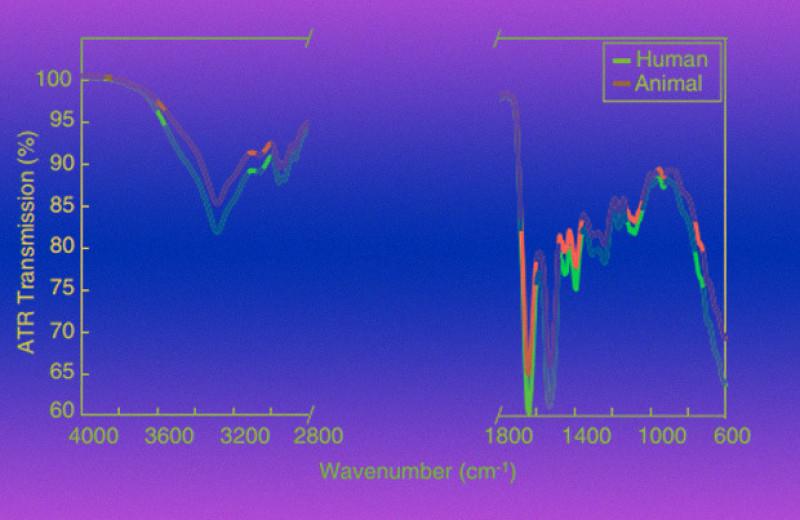 Инфракрасная спектроскопия помогла алгоритму отличить человеческую кровь от животной