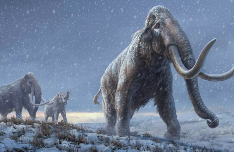 Миллион лет во льдах: ученые выделили самую древнюю ДНК в истории науки