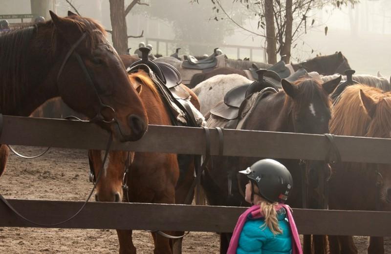 Ольга Мягкова: Как прийти в конный спорт. 5 советов родителям
