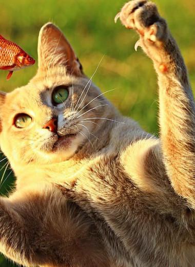 Домашние кошки охотятся не от голода, а исключительно из-за инстинкта хищника