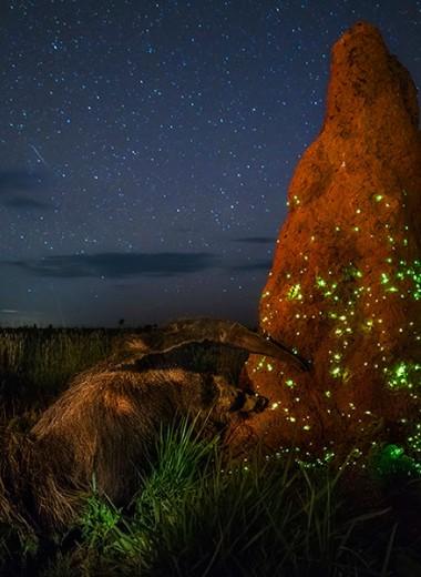 Победителя конкурса Wildlife Photographer of the Year дисквалифицировали за снимок чучела