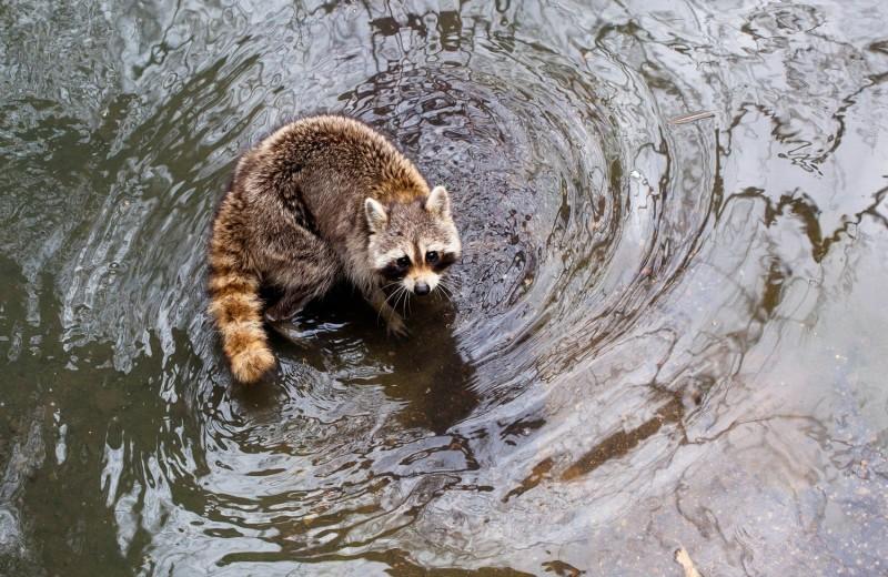 Как по вине человека изменились базовые инстинкты животных
