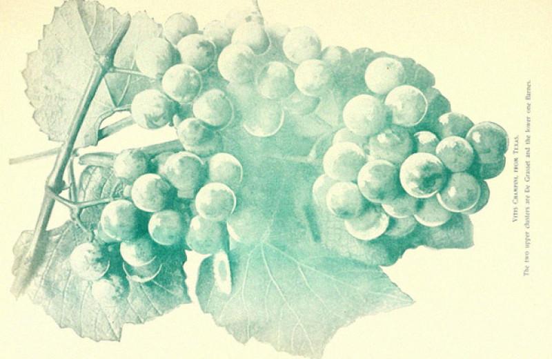 Химики научили компьютер определять происхождение вина по химическому составу
