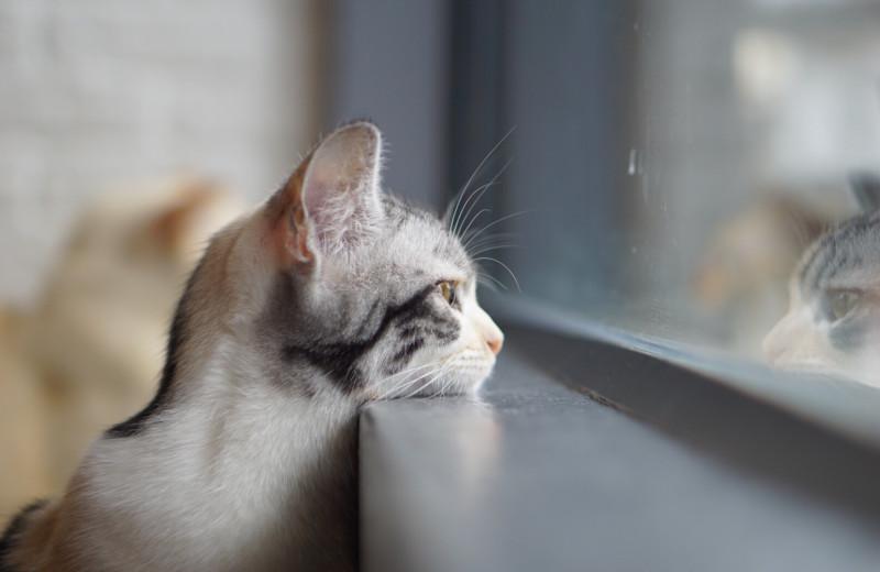 Как долго кот помнит старого хозяина?