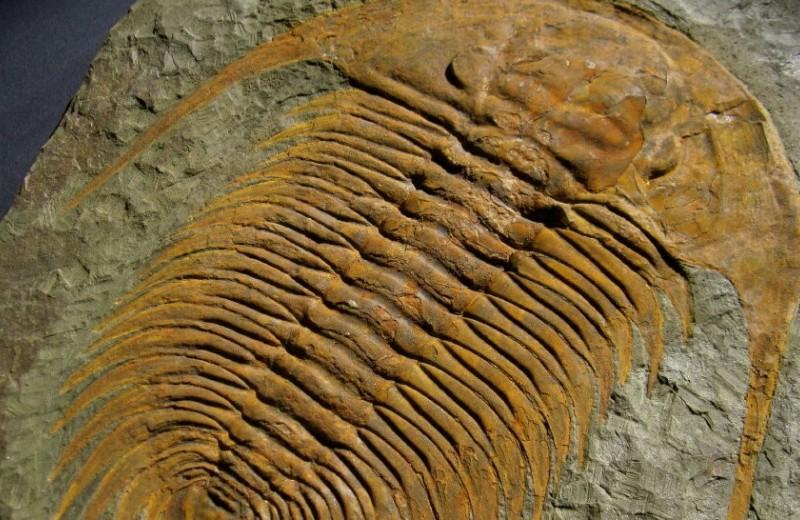 Массовые вымирания оказались связаны с удушьем