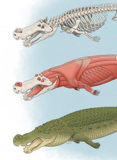 Гигантский доисторический крокодил мог охотиться на динозавров