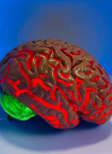 Существует ли «мужской» или «женский» мозг?
