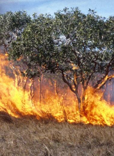 Реки вынесли треть черного углерода от лесных пожаров в океан