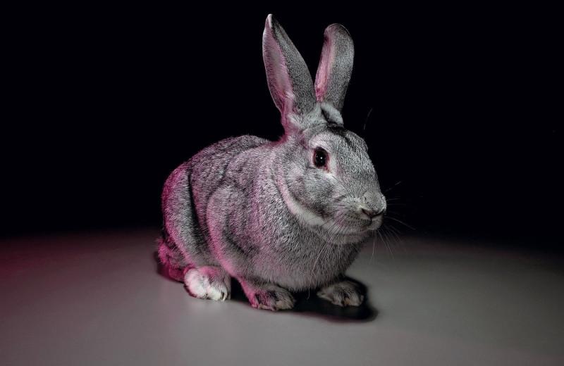 На личном опыте: как ведут научные эксперименты на животных
