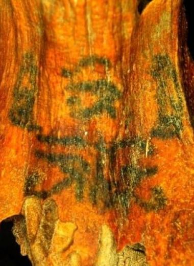 На телах египетских мумий обнаружены десятки загадочных татуировок