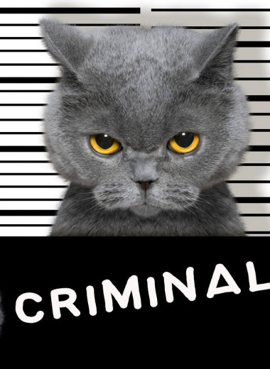Лапы вверх: животные и птицы, которые были арестованы за различные преступления