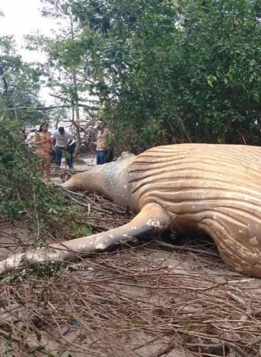 Откуда в чаще амазонского леса взялся кит?