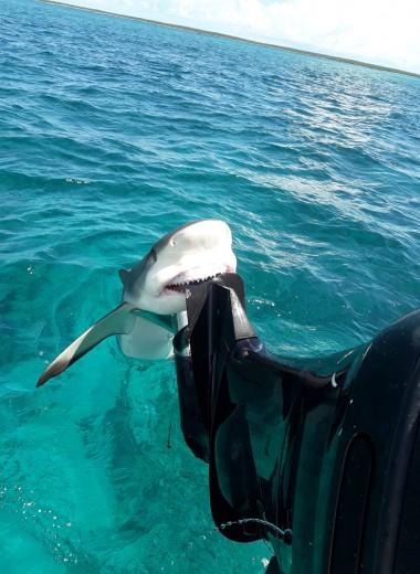 Акула вцепилась в лодку ловца барракуд: видео