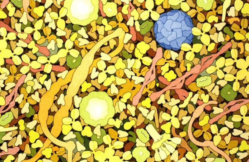 Машинное обучение помогло диагностировать рак по ДНК микроорганизмов в крови