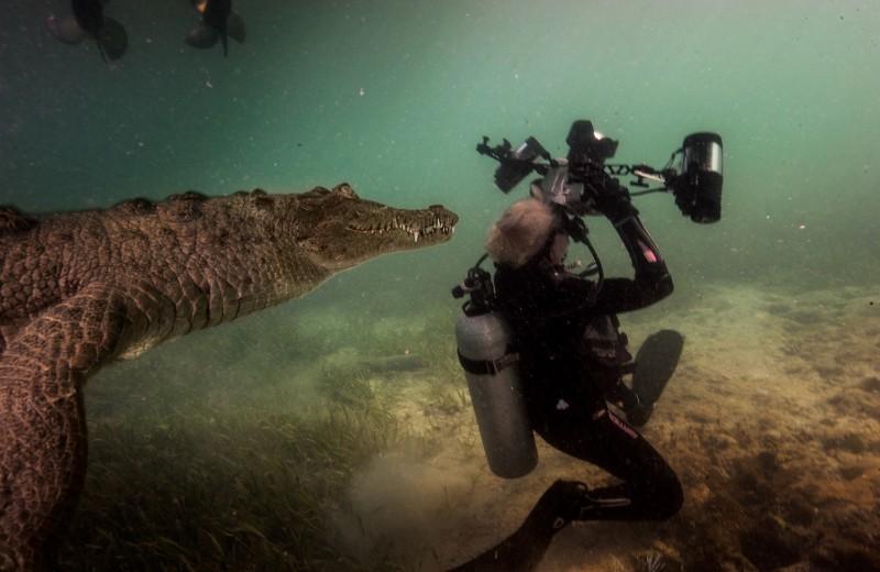 С крокодилом за спиной: история одного снимка