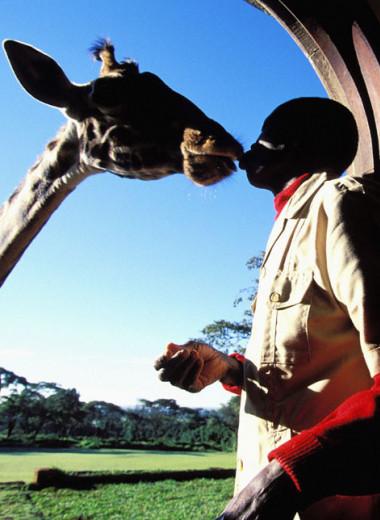 В мире людей и зверей: как в Кении возвращают долг природе
