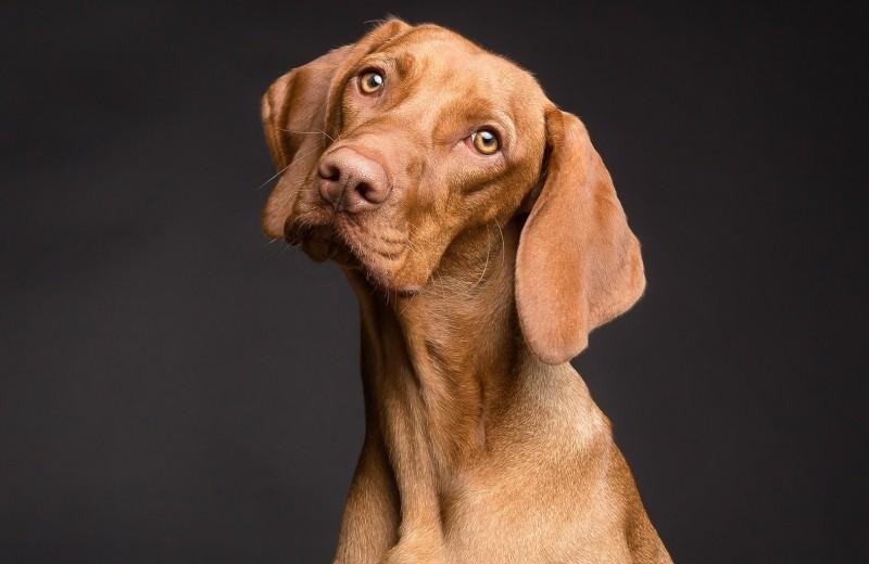 Запоминают слова и не любят курильщиков: 14 редких фактов о собаках