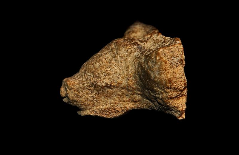 Артефакты: 5 удивительных произведений палеолитического искусства, найденных в России