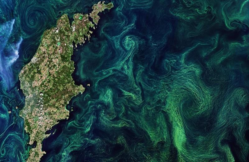 Мировой океан можно восстановить за 30 лет: новое исследование