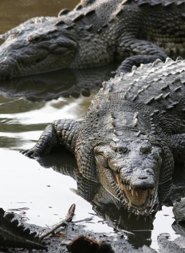 Почему крокодилы выглядят так же, как 200 млн лет назад