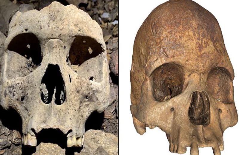 В Габоне нашли останки людей доколониальной эпохи с деформированными черепами